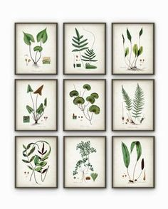 Green Plant Wall Decor Set Of 9 - Botanical Art Posters - Antique Plant Book Plate Illustration Giclee Picture - AB74