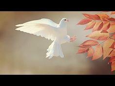 Imagem gratis no Pixabay - Dove, Bird, Animal, Pena, Plumagem Bird Pictures, Pictures Images, Free Pictures, Animal Pictures, Free Images, Quotes Images, Hd Images, Dove Symbolism, Image New