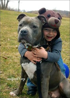 Uplifting So You Want A American Pit Bull Terrier Ideas. Fabulous So You Want A American Pit Bull Terrier Ideas. Dogs And Kids, Big Dogs, I Love Dogs, Cute Puppies, Cute Dogs, Dogs And Puppies, Doggies, Pitbull Blue, Nanny Dog