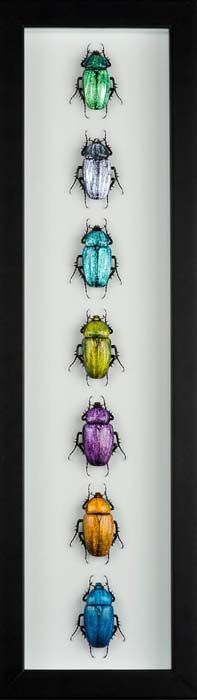 Emanuel Toffolo, Seven colored Scarabs Lampworked Glass