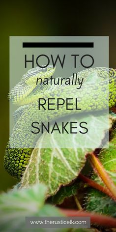 How to Naturally Repel Snakes - While most of us don't want to be close and personal to snakes, they do serve a purpose. Here is how to naturally repel snakes from your property. Snake Repellant Plants, Insect Repellent, Keep Snakes Away, Household Pests, Best Chicken Coop, Chicken Coops, Weed Control, Garden Pests, Gardens