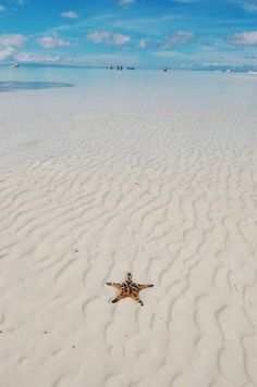10 Photos of Beaches Around the World - Star not in the sky . Bohol…