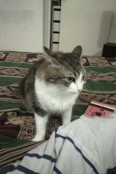 Esta es mi gata chispita