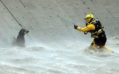 Dedication: 50 firefighters and a helicopter rescued this dog from the Los Angeles River