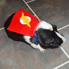 Guinea pig Flash costume cape - The Flash cavy cape costume Hamster Costume, Pig Halloween Costume, Guinea Pig Costumes, Pet Costumes, Costume Ideas, Halloween Ideas, Hamsters, Cute Guinea Pigs, Pet Rabbit