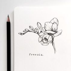 Freesia symbolizes innocence and thoughtfulness. Flower Sketches, Drawing Sketches, Drawing Ideas, Botanical Drawings, Botanical Illustration, Lottus Tattoo, Tattoo Drawings, Art Drawings, Floral Drawing