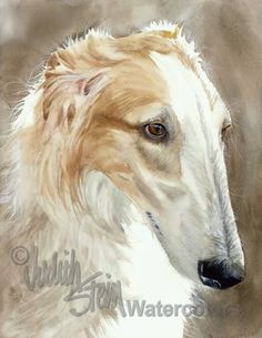 Quick Dog is an Open Edition Giclee Art Print from a watercolor featuring a Borzoi Dog. Also called the Russian Wolfhound, the Borzoi is a quiet and