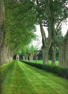 Grass And Plane Trees Make An Avenue In The Garden Of The Century Mas De Pilons Farmstead In Provence, France Landscape Architecture, Landscape Design, Garden Design, Formal Gardens, Outdoor Gardens, Garden Paths, Garden Landscaping, Exterior, French Countryside