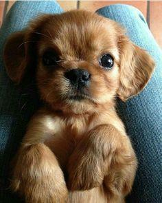 Cute #CuteAnimals #CuteBabyAnimals #Animals #cute https://instagram.com/p/BQHrrNKAzTr/