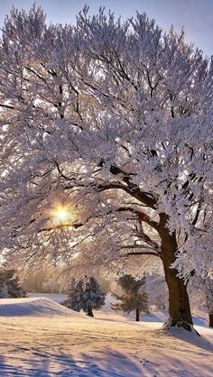 Christmas Scenery, Winter Scenery, Winter Magic, Winter Fun, Nature Images, Nature Pictures, Winter Wallpaper, Foto Art, Winter Pictures