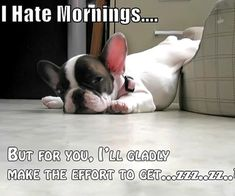 French Bulldog I Hate Mornings Funny Dog Beds, Funny Dogs, Funny Animals, Cute Animals, Funny Boxer, Animals Dog, Love My Dog, Puppy Love, Cute Puppies