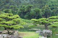 Image result for niwaki
