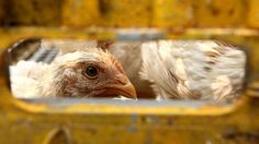 Dont Freak Out About the New Bird Flu Outbreak (Yet)