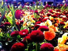 Spring<3
