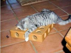 Working cat parents often worry about their cats being bored when left home alone all day, then becoming mischievous and destructive. Toys like catnip cigars, a talking ball, or a Birdland DVD will keep cats happy and out of trouble.: Peek-a-Prize Toy Box