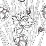 Black and white seamless pattern with flowers-09 Royalty Free Stock Image