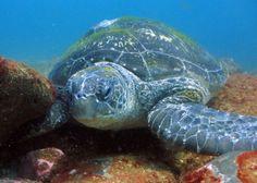 snorkel in gold coast