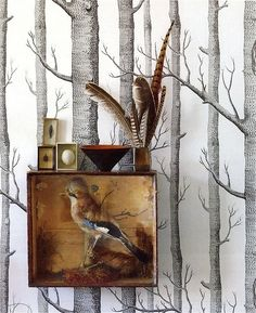 silver birch wallpaper taxidermy bird egs and feathers. Woods by Cole & Son
