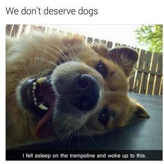 Funny pictures about Why I Love Dogs. Oh, and cool pics about Why I Love Dogs. Also, Why I Love Dogs photos. Animal Jokes, Funny Animal Memes, Dog Memes, Cute Funny Animals, Funny Animal Pictures, Cute Baby Animals, Funny Cute, Funny Dogs, Animals And Pets