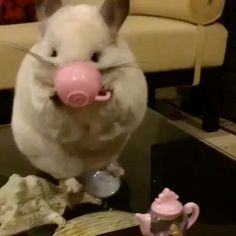Alright, I want more tea 🐹☕️ Video by: @cute_bubu #AnimalAddicts to be featured!