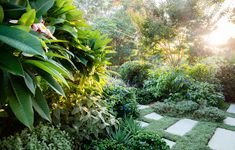 A Slice Of Primeval Paradise In Bronte Outdoor Stairs, Outdoor Rooms, Landscape Design, Garden Design, Cactus, Blue Spruce, Tropical, The Design Files, Gardens