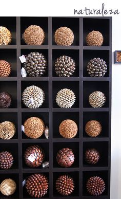 Seed ornaments in bookcase