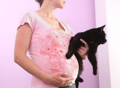 Nombre de mes clientes sont souvent paniquées lorsqu'elles sont enceintes, ont un chat chez elles, et sont séronégatives pour la toxoplasmose. Car souvent, elles sont mal informées. De moins en moi…