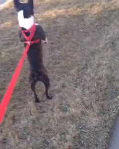 Makin' my way downtown > amazing On I love practical jokes and humor. That there's frankly no joke that I don't think is funny. Funny Dog Memes, Funny Dog Videos, Funny Animal Memes, Cute Funny Animals, Funny Animal Pictures, Cute Baby Animals, Funny Cute, Funny Photos, Funny Dogs