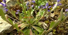 Beneficiile neștiute ale amărelii | Paradis Verde Fitness, Medicine, Natural Remedies, Plant