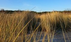Into the wild #nature #wild #beach #lighthouse #dunes #grass #poland #winter #seashore #IntoTheWild