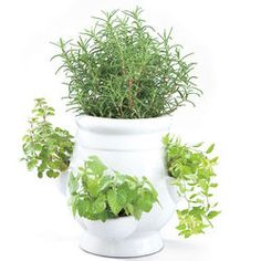Windowsill Herb Garden Kit $29.95 Have Terra Cotta Strawberry  Planter...this Year,