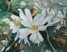 Magnolien Blüten als Frühlingsboten (c) Aquarell von Frank Koebsch | Magnolien (c) Aquarell von Frank Koebsch