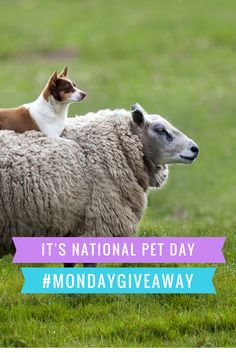 ‪#‎MondayGiveaway‬ Check out our Facebook page for this week's National Pet Day photo contest! facebook.com/EntirelyPets/