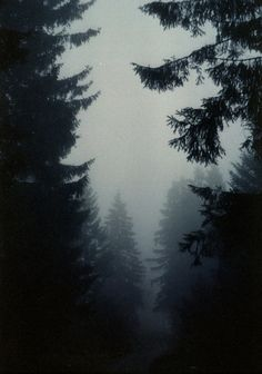 dark forest and fog - beautiful images and wallpapers We Love Each Other, Dark Forest, Foggy Forest, Misty Forest, Magical Forest, Love Photos, The Great Outdoors, Mother Nature, Mists