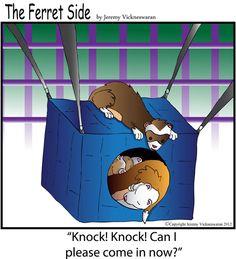 cartoon of ferret peering at other ferrets in hanging hammock