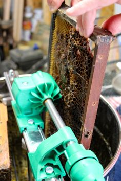 Honey Comb in Frame Being Placed into Extractor | Oysters & Pearls
