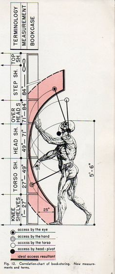 """Frederick Kiesler's forensic analysis of the range of human motion regarding the selection of books from shelves. Using a Vesalius image for his 5'6"""" person. 1939. ."""