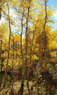 Utah, autumn. Photo by Julie H-R