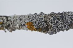margie's amazing lichen macros.