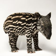 natgeocreative: A six-day-old Malayan tapir at the @mnzoo. In the wild, such spots would help to camouflage this baby as it rests in dappled sunlight on the rainforest floor. Photo by @joelsartore #PhotoArk.