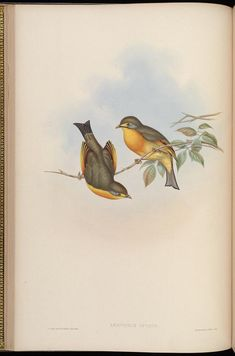 Birds of Asia / by John Gould
