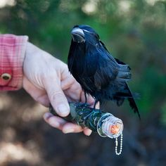 Raven Revisited | Flickr - Photo Sharing! SO freaking clever!!!