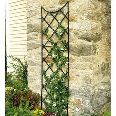 Putting against MY chimney this summer with a climbing rose!