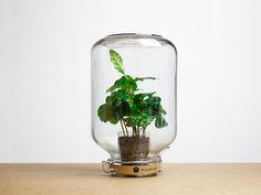 Pika plant www.daily-poetry.nl