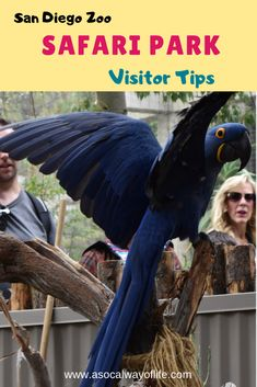 Have you been wanting to go visit the San Diego Zoo Safari Park? Wondering when you should go and what you can do there? Read on for some helpful tips!
