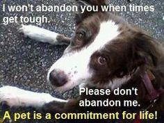 Please don't abandon me.