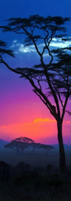 Serengeti National Park, Tanzania - purple, blue, pink hues with tree silhouettes. No wonder the tanzanite gem stone is so gorgeous.