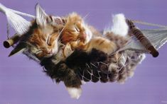 kittens | Cute-Kittens-kittens