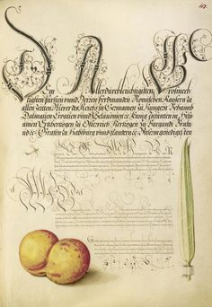 [folio 117r] Joris Hoefnagel (illuminator) [Flemish / Hungarian, 1542 - 1600], and Georg Bocskay (scribe) [Hungarian, died 1575], Mayfly, Apricot, and Reed Grass, Flemish and Hungarian, 1561 - 1562; illumination added 1591 - 1596, Watercolors, gold and silver paint, and ink on parchment, Leaf: 16.6 x 12.4 cm (6 9/16 x 4 7/8 in.), 86.MV.527.117.