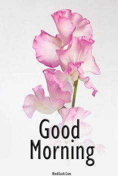 Good Morning Beautiful Pictures, Good Morning Nature, Good Morning Happy Sunday, Good Morning Images Flowers, Good Morning Image Quotes, Good Morning Images Hd, Morning Quotes, Morning Memes, Good Morning Greeting Cards